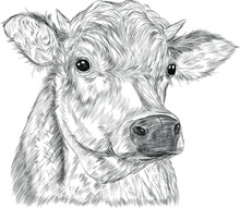 Cow Kind Animal Farm Advertisi...