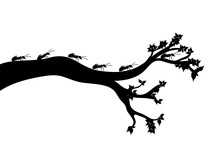 Vector Silhouette Of Branch Wi...