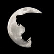 Vector silhouette of crying lion on moon background. Symbol of night.