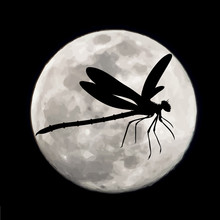 Vector Silhouette Of Dragonfly...