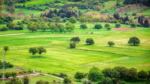 Fields full of vibrant green grass and trees in spring Canvas Print