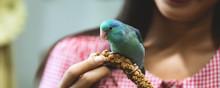 Forpus Parrot Bird On Woman Hand