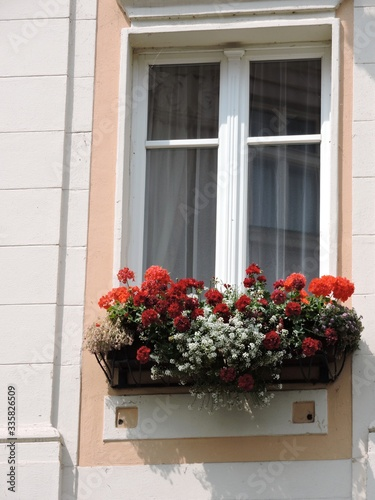 window with flowers in old house, Karlovy Vary Wallpaper Mural