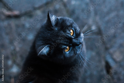 Black cat portrait. Friday 13th. Fototapet