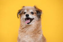 Mix Breed Happy Dog Smile And ...