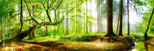 Fototapeta Panorama vom Wald im Frühling mit heller Sonne, die durch die Bäume strahlt