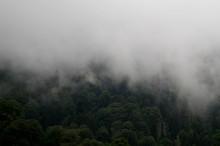 Foggy Kackar Mountains And Tre...