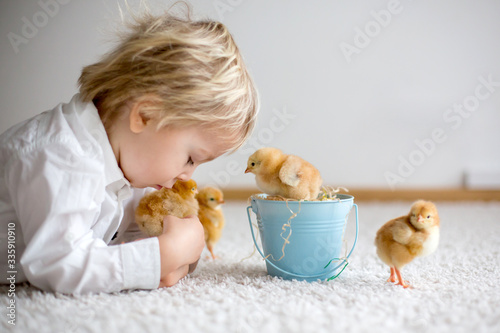 Obraz Cute sweet little blond child, toddler boy, playing with little chicks at home, baby chicks in child - fototapety do salonu