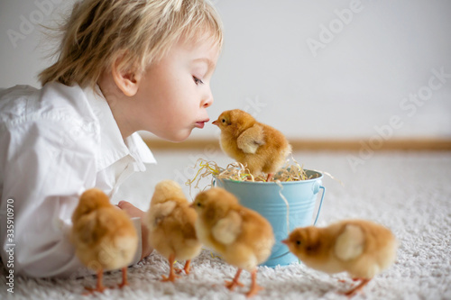 Cute sweet little blond child, toddler boy, playing with little chicks at home, Wallpaper Mural