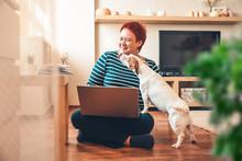 Woman Works Online Using Laptop Computer, Dog Interferes. Quarantine Coronavirus