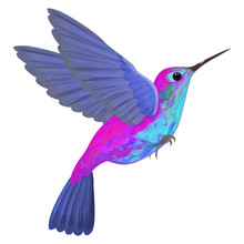 Hummingbird Isolated. Vector I...