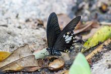 Butterflies In Cat Tien Nation...
