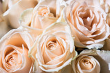 close-up of a delicate pink and white rose in a bouquet of white roses for a special day