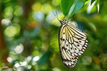 Paper Kite Butterfly - Idea Le...