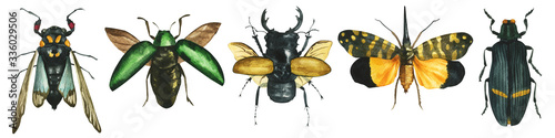 Tela set of watercolor painted tropical exotic beetles and butterflies (odontolabis, Tosena, Sternocera) isolated on white background entomological realistic drawing