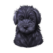 Schnoodle Puppy Digital Art Illustration Isolated On White.