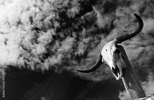 Obraz na plátně Stierschädel an einem Pfosten ragt in bedrohlichen Himmel