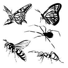 Pictograms With Insects. Black...