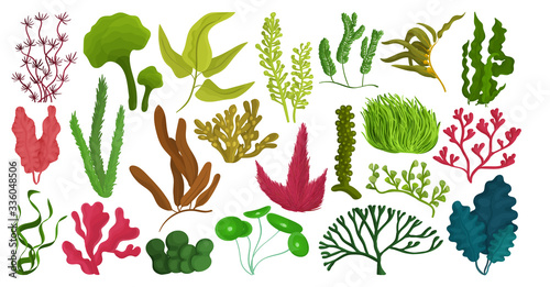 Fotografiet Seaweed isolated cartoon set icon