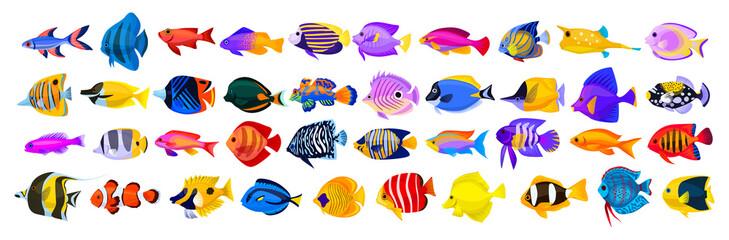 Ikona crtanog filma vektor tropskih riba. Izolirane ikone crtića akvarijske životinje. Vektorska ilustracija tropske ribe na bijeloj pozadini.