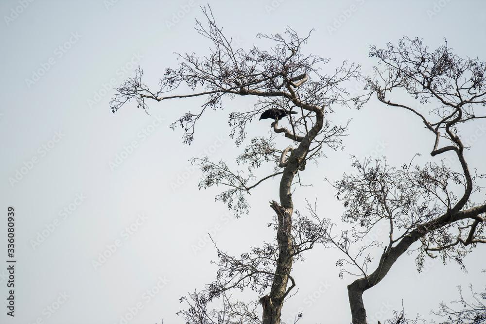 Crow in tree against blue sky.