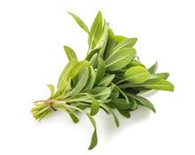 Sage( Salvia Officinalis )