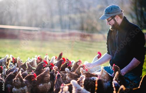 Leinwand Poster männlicher, bärtiger Bauer, Landwirt mit freilaufenden Hühnern auf dem Bauernhof