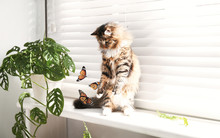 Adorable Cat Playing With Butterflies On Window Sill At Home