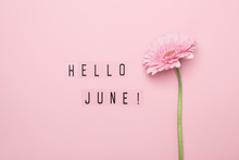 Hello June Text And Pink Gerbe...