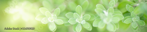 Fototapety zielone  beautiful-nature-view-of-green-leaf-on-blurred-greenery-background-in-garden-with-copy-space