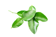 Fresh Kaffir Lime Leaf Isolated On White Background.