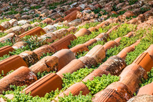 Roof With Red Clay Tiles And G...