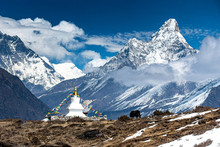 Yak, Stupa Y Ama Dablam.