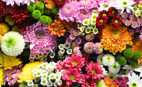Leinwand Poster Flowers wall background with amazing red, orange, pink, purple, green and white
