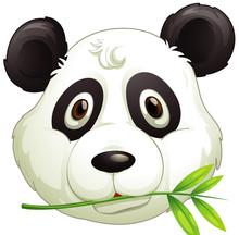 Face Of Cute Panda Eating Bamboo Leaves