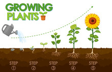 Diagram Showing How Plants Gro...