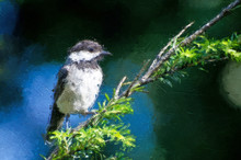 Impressionistic Style Artwork Of A Black-Capped Chickadee Against A Blue Background
