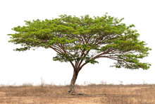 An Image Of A Tree With A Whit...