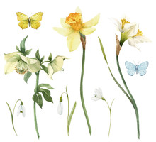 Beautiful Watercolor Floral Set With Gentle Hellebore And Daffodil Flowers. Stock Illustration.