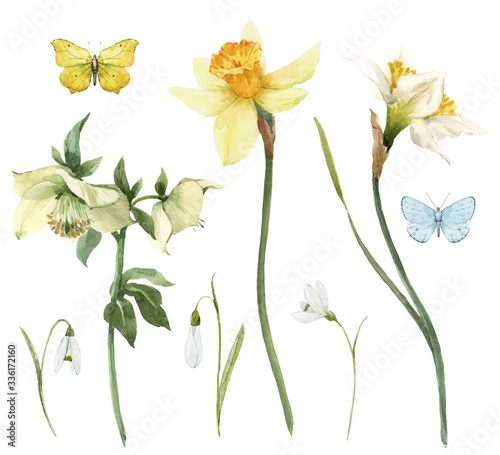 Photo Beautiful watercolor floral set with gentle hellebore and daffodil flowers