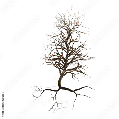 leafless tree with roots, branches and twigs (3d nature render isolated on white Wallpaper Mural