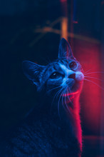 Curious Cat Under Fluorescent ...