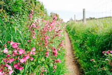 Wildflower-lined Country Path