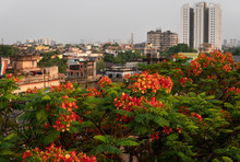 Top View Of A City With Red Flowers In Front