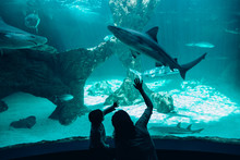 Mother And Son Admiring Sharks...