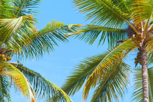 Tropical Background Photo With Palm Trees