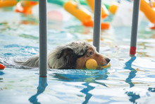 A Dog Swims In A Pool With A T...