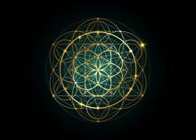 Seed Of Life Symbol Sacred Geometry.  Geometric Mystic Mandala Of Alchemy Esoteric Flower Of Life. Gold Luxury Design, Vector Divine Meditative Amulet Isolated On Black Background