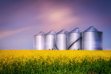 Round Steel Bins Sitting In A Canola Field At Evening
