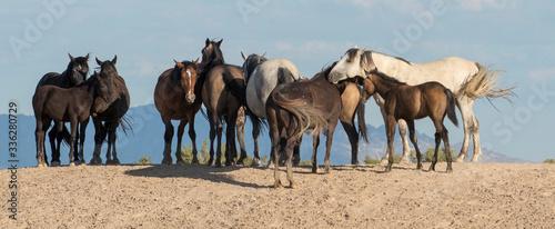 Wild horses at rest